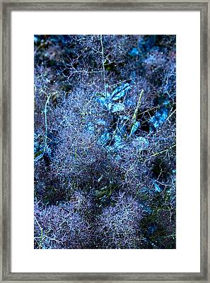 Fuzzy Plant Texture In Blue Framed Print