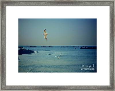 Framed Print featuring the photograph Gabbiani - Seagulls by Ze  Di
