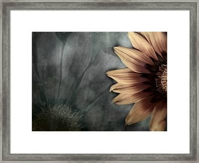 Gaillardia Framed Print