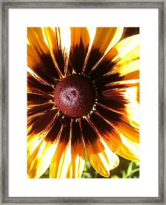 Framed Print featuring the photograph Gaillardia by Gary Stamp