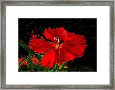 Galactic Dianthus Framed Print by David Kehrli