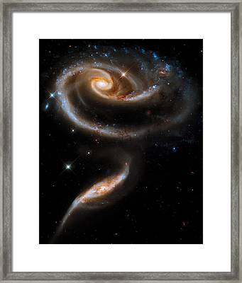 Galactic Rose Framed Print by Adam Romanowicz