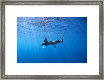Galapagos Beauty Framed Print by Monique Comfort