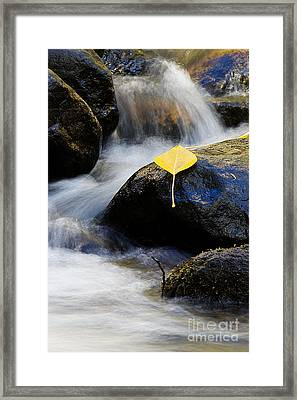 Framed Print featuring the photograph Galena Creek Trail  by Vinnie Oakes