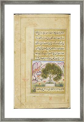 Galgal' (a Type Of Large Lime) Framed Print by British Library