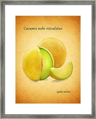Galia Melon Framed Print by Mark Rogan