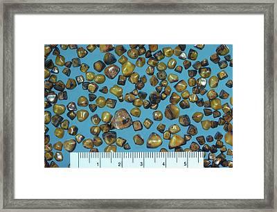 Gall Stones Framed Print