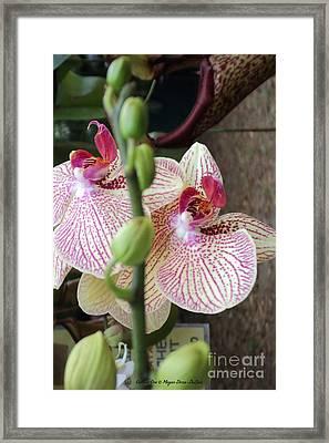 Gallant Orchid Framed Print by Megan Dirsa-DuBois