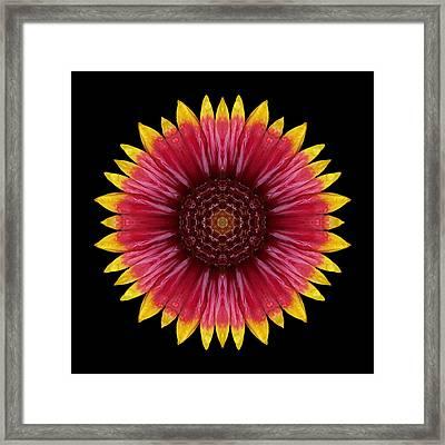 Galliardia Arizona Sun Flower Mandala Framed Print