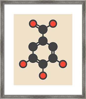 Gallic Acid Molecule Framed Print