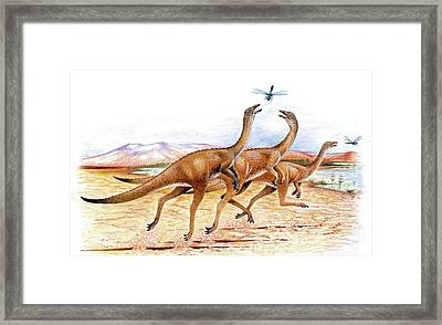 Gallimimus Dinosaurs Framed Print