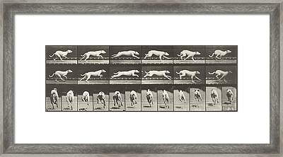 Galloping  Framed Print by Celestial Images