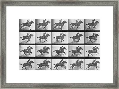 Galloping Horse Framed Print