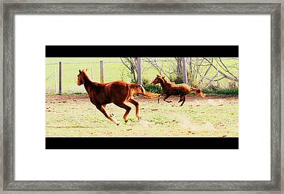 Galloping Horses Framed Print