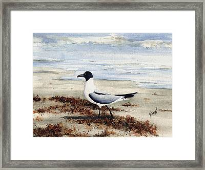 Galveston Gull Framed Print by Sam Sidders