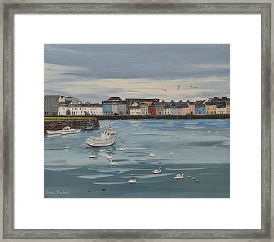 Galway Swans Galway Ireland Framed Print by Diana Shephard