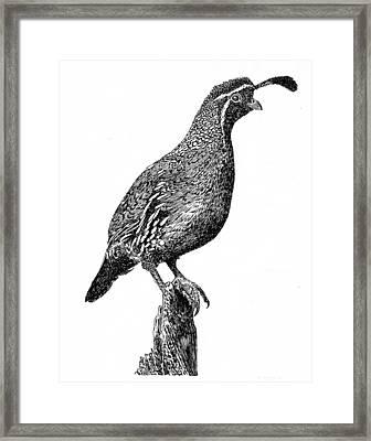 Gambel Quail Framed Print by Jack Pumphrey