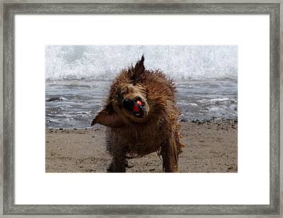 Game Of Dogseaball Framed Print