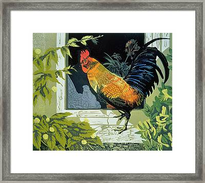 Gamecock And Hen Framed Print by Carol Walklin