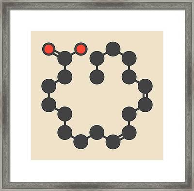 Gamma-linolenic Acid Molecule Framed Print by Molekuul