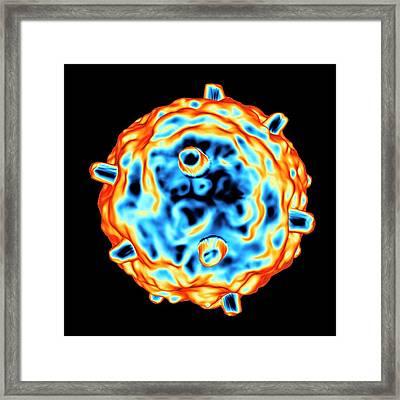 Gammaretrovirus Framed Print