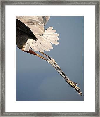 Gams Framed Print