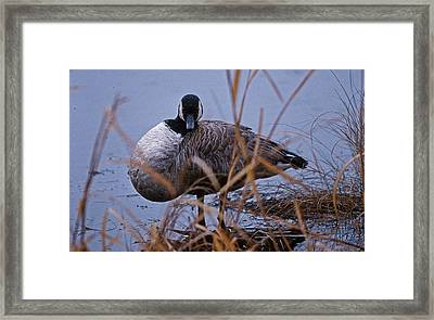 Gander Eyes Framed Print