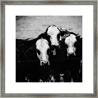 Gangland 1 Framed Print by Wendy J St Christopher