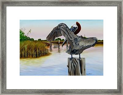 Gar Lake Pelican 2 Framed Print by Phyllis Beiser