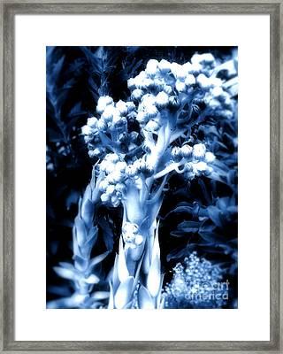 Garden Art Framed Print by Claudette Bujold-Poirier