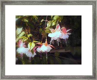Garden Ballerinas Framed Print by Lingfai Leung