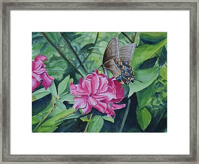Garden Beauties Framed Print