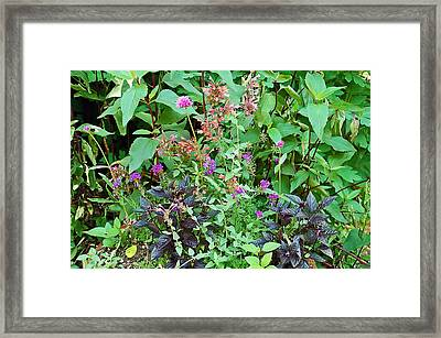 Garden Bouquet Framed Print by Aimee L Maher Photography and Art Visit ALMGallerydotcom