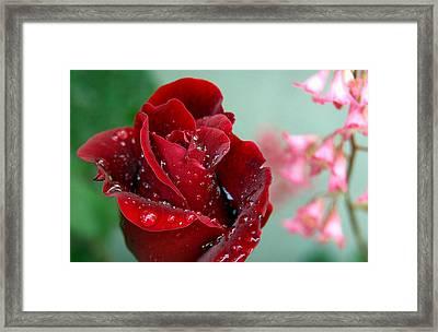 Garden Bouquet Framed Print by Steven Milner