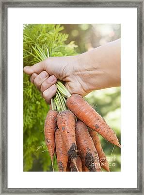 Garden Carrots Framed Print