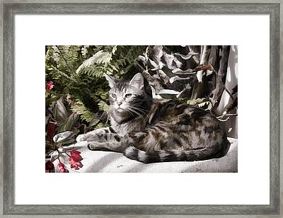 Garden Cat Framed Print by Photographic Art by Russel Ray Photos