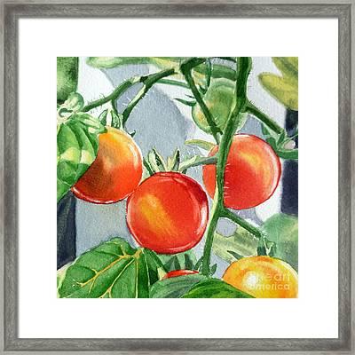 Garden Cherry Tomatoes  Framed Print by Irina Sztukowski