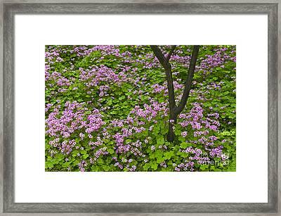 Garden, China Framed Print by John Shaw