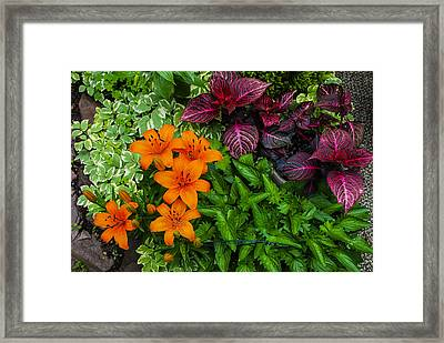 Framed Print featuring the photograph Garden Colors by Phil Abrams