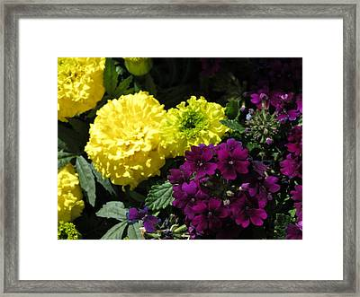 Garden Contrast Framed Print by Fortunate Findings Shirley Dickerson