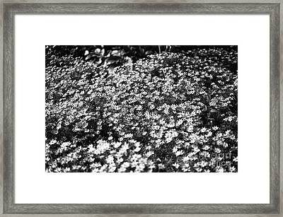 Garden Crowd Mono Framed Print
