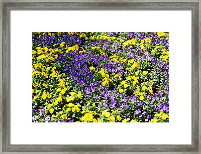 Garden Delight Framed Print by Aimee L Maher Photography and Art Visit ALMGallerydotcom