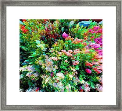 Garden Explosion Framed Print by Alys Caviness-Gober