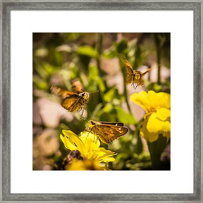 Garden Fairies Strike A Vogue Pose Framed Print by Len Romanick