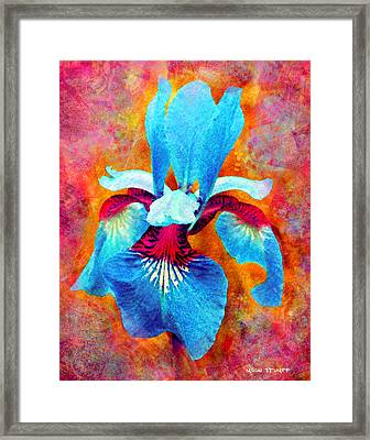 Garden Fiesta Framed Print by Moon Stumpp