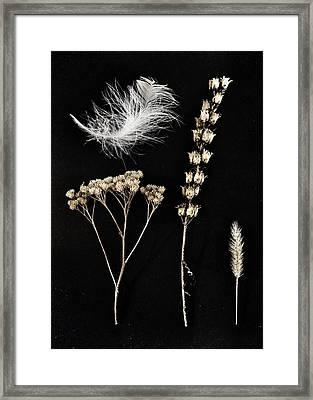 Garden Finds Framed Print by Marianna Mills
