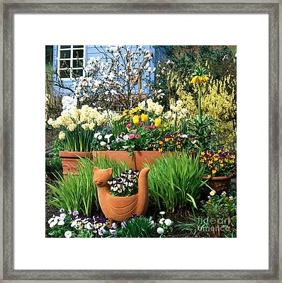 Garden Flowers In Containers Framed Print