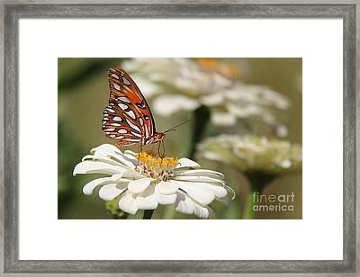 Garden Gem Framed Print by Leslie Kirk