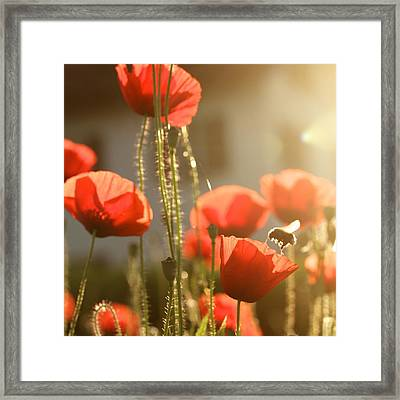 Garden Glow Framed Print by Colleen Williams
