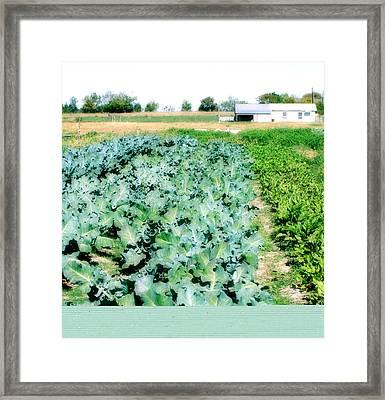 Garden Grow Framed Print by Paulette Maffucci